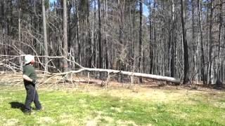 Andrew's Tree Pros - Tree Service Videos | Tree Service Wake
